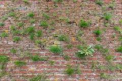 Facciata della muratura con erba Fotografia Stock