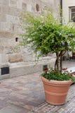 facciata di pietra antica con il fogliame dei vasi e dei fiori Fotografie Stock Libere da Diritti