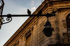 Facciata di vecchie costruzioni coloniali dal quadrato centrale a Avana, Cuba fotografie stock libere da diritti