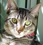 Face 2 do gato Fotos de Stock