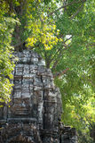 Face amongst the trees, Siem Reap, Cambodia Royalty Free Stock Photography