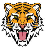 Face of angry tiger, vector  Stock Images