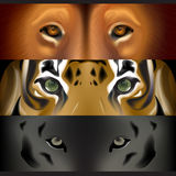 The face of animals Royalty Free Stock Photos