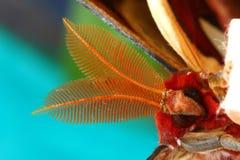 Face of Atlas Moth (Attacus atlas) stock photos