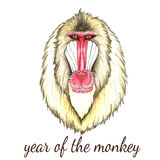 Face of baboon monkey. Watercolor vector illustration on white background.Poster for New Year 2016 Royalty Free Stock Image