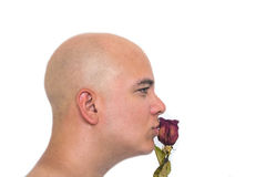 Face of a bald man in white background. Kissing an old red rose Stock Photo