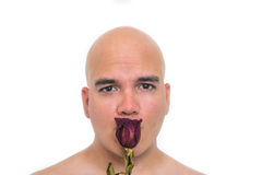 Face of a bald man in white background. With an old red rose on his mouth Royalty Free Stock Photo