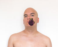 Face of a bald man in white background. Unfocused body with an old red rose on his mouth Stock Photography