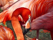 The face of a beautiful red flamingo, a portrait. stock photo