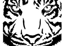 The face of the Bengal Tiger vector. The face of the tiger black-white illustration vector Stock Images
