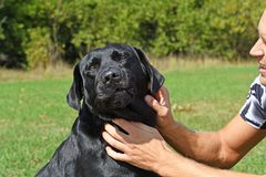 Face of black dog Stock Photo