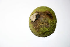 Face on black walnut. This black walnut was found on the ground under our tree just like this. Could be a sad walnut pirate royalty free stock image