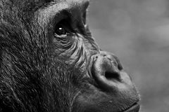 Face, Black, Wildlife, Black And White