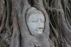 Face budha in the tree Royalty Free Stock Photo