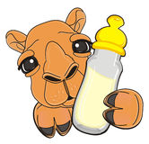 Face of camel peek up from drink. Brown muzzle of camel stick out from bottle of milk Stock Photography