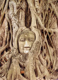 Face carved in tree. A carving of a buddhas face wrapped by tree roots at Wat Mahathat in Ayuthaya near Bangkok in Thailand royalty free stock image