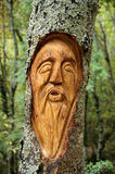 Face carved on a tree Stock Photos