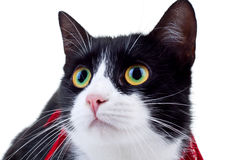 Face of cat Royalty Free Stock Photography