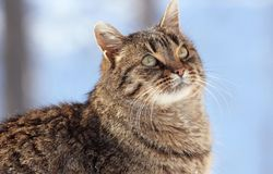 Face of cat. In nature during winter Stock Image