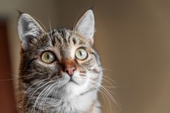 The face of a cat with big eyes closeup stock image