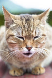 Face of cat Royalty Free Stock Image