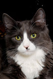Face of a cat Royalty Free Stock Images