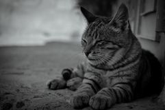 The face of the cat royalty free stock photos