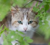 Face of cat among spring greens Stock Image
