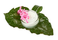 Face cream with green leaves Royalty Free Stock Photography