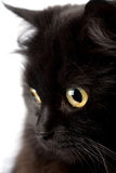Face of cute black cat Stock Images