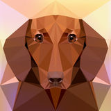 Face of a dachshund dog Stock Photos