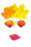 Face das folhas Imagens de Stock