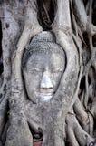 Face de Buddha dentro da árvore 1 Fotos de Stock Royalty Free
