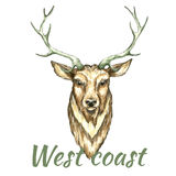 Face of deer. Watercolor vector illustration on white background Stock Photo