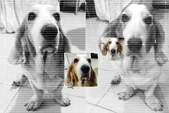 Face detection technology for dog basset hound with screen detection line and cute color image background. stock photos
