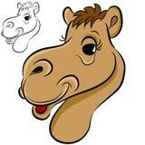 Face do camelo ilustração royalty free