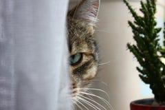 Face do gato Imagens de Stock