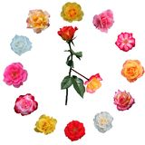 Face do relógio feita das rosas Imagens de Stock Royalty Free