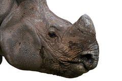 Face do rinoceronte Fotos de Stock Royalty Free