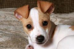 Face doce do filhote de cachorro imagens de stock