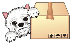 Face of dog with box Royalty Free Stock Images