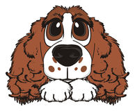 Face of dog with paws. Cute snout of brown spaniel lying on his paws Royalty Free Stock Images