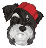 Face of dog in red cap Stock Photography