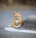 Face of domestic street cats lying relaxing on asphalt road Royalty Free Stock Image