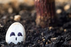 A face drawn on a pumpkin seed is stuck in the ground for cultivation, the eyes of a young pumpkin royalty free stock images