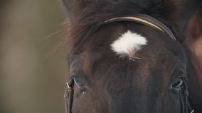The face and eyes of the black horse closeup, spot on his forehead
