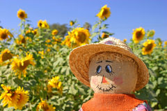 The Face of Fall Royalty Free Stock Image