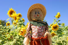 The Face of Fall Royalty Free Stock Photos