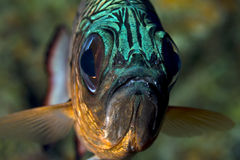Face of fish Royalty Free Stock Photos