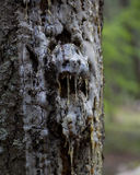 Face of the Forest